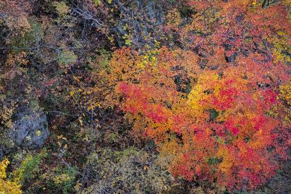 色づいたもみじが広がる秋の日本の渓谷の風景
