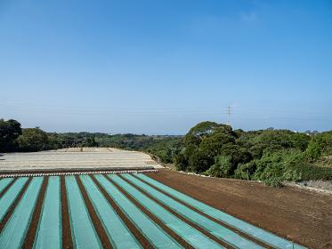 三浦半島の畑の風景