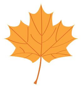 秋のオレンジ色の楓