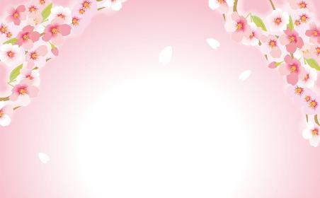 ふわっと優しい桜