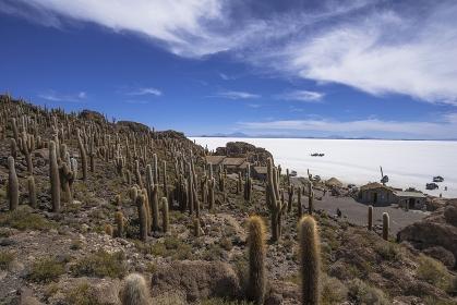 ボリビア ウユニ塩湖のインカ・ワシ島