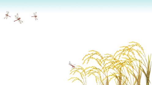 稲と赤トンボ 背景 フレーム 水彩 イラスト 横長