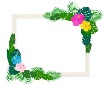 南国の植物や花と額縁
