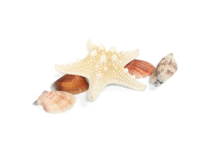 ヒトデや貝殻 4 白背景