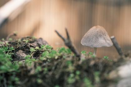 森の中に生きる小さなキノコのイメージ素材
