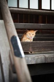 面白い顔をしている猫