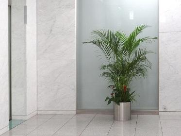ビルのエレベーターホールの観葉植物