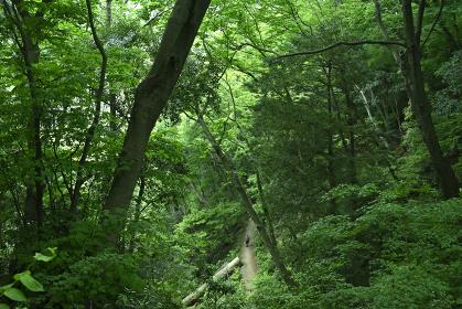 Mt.Takao 2021-May Spring-Summer (Hachioji, Tokyo,