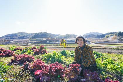野菜の収穫をする高齢の女性
