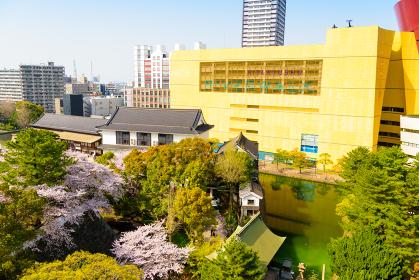 小倉城桜まつり 小倉城からの眺め