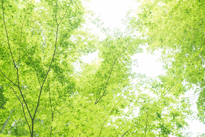 竹林・見上げる