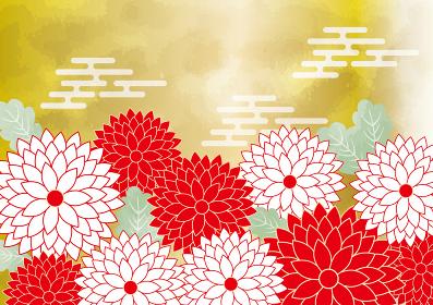 菊:和風 和柄 和 フレーム 菊 菊花紋 葉 植物 きれい シンプル 水彩 にじみ 和風