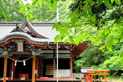 堂々した花尾神社の自然
