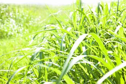 陽があたる草むら