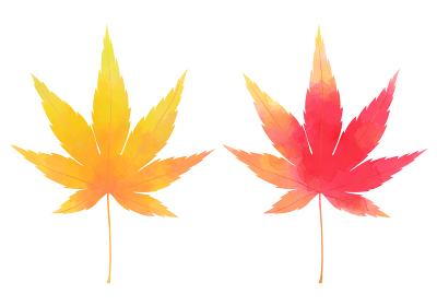 秋の紅葉、黄色と赤のもみじ 水彩風