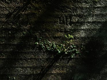 石切り場の壁面 千葉県鋸山