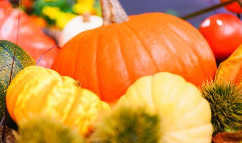 【秋イメージ】ハロウィーンのカボチャ