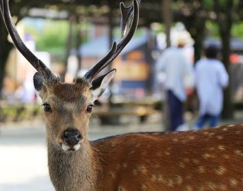 町中を歩く鹿の視線