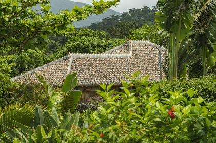 草木に囲まれた石垣島の民家