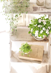 インドアグリーンと花のインテリア