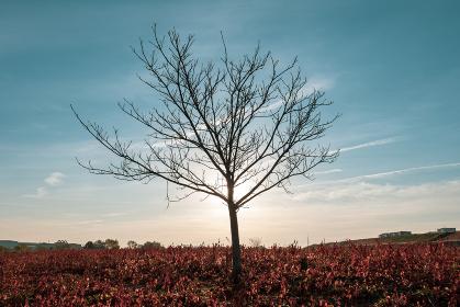 冬枯れの木と早朝の青空 12月