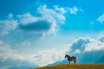 秋の阿蘇の原野に放牧された馬