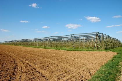 apple tree plantation in herxheim by april 2015