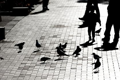 休日、昼下がりの横浜山下公園、ハトと子供のシルエット・日本