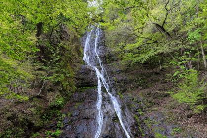 埼玉県・新緑と丸神の滝