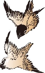 浮世絵 鳥 その12