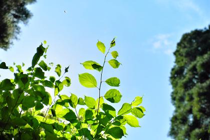 虫の飛ぶ新緑の森