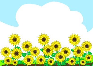 夏空と向日葵の畑