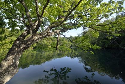 十二湖 八景の池