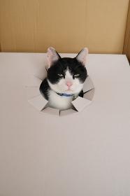 疑いの目で見つめる猫