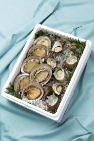 魚貝類の贈り物