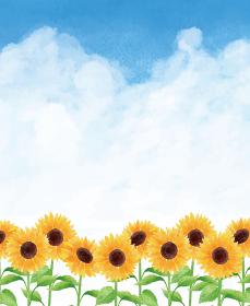 ひまわり ヒマワリ 向日葵 青空 枠 下 ひまわり畑 夏 花 イラスト 手描き
