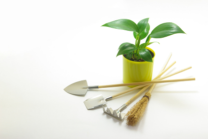 白バックに鉢植えのフィロデンドロンとミニチュアの園芸用品 横長