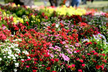 暖かい春を迎えた花の景色