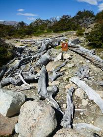 アルゼンチン・パタゴニア地方にてフィッツロイ山の登山道で見かけた流木
