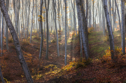 Sun and mist in the autumn wood