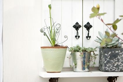 観葉植物のディスプレイ