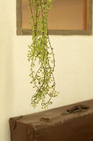観葉植物とトランク