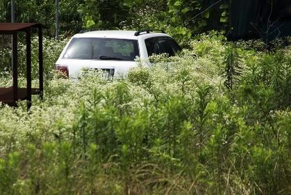 草むらに放置された乗用車