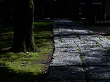 石畳の参道と苔むした林 7月