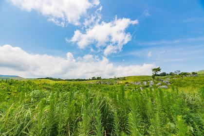 初夏の爽やかな緑の草原と石灰岩の平尾台