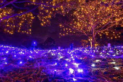 夜の勝山公園の樹木を飾ったイルミネーション