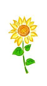 手描きイラスト素材 ひまわり 向日葵 ヒマワリ