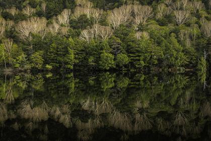 緑の針葉樹と芽吹き前のダケカンバが湖面に映りこんで模様を描く