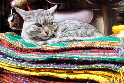ボリビア・ラパスにてエスニック織物が積まれた場所に座って寛ぐ野良猫