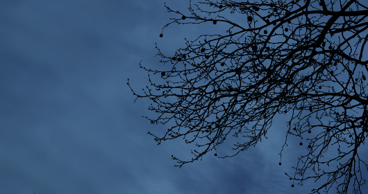 夜の枯れ枝 1612